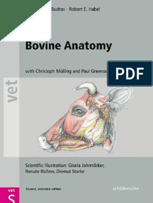 óriási perineum condyle színes vastagbélrák