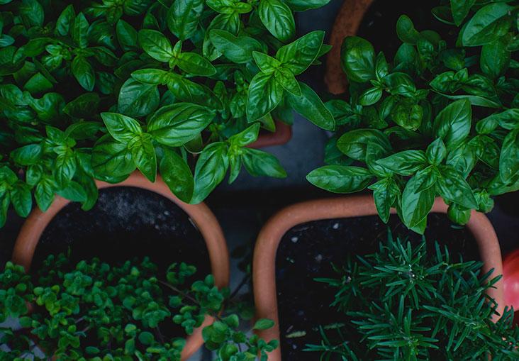 gyógynövények emberi papillomavírushoz