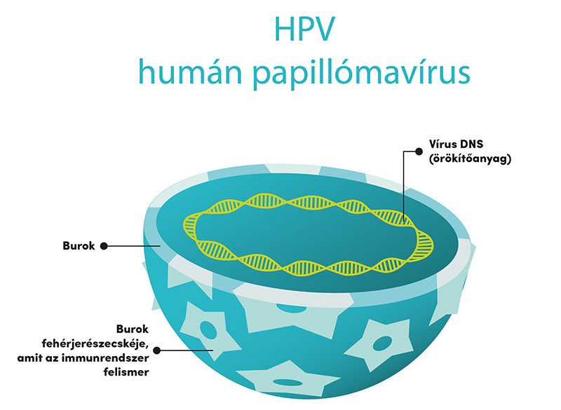 emberi papillomavírus és prosztatarák
