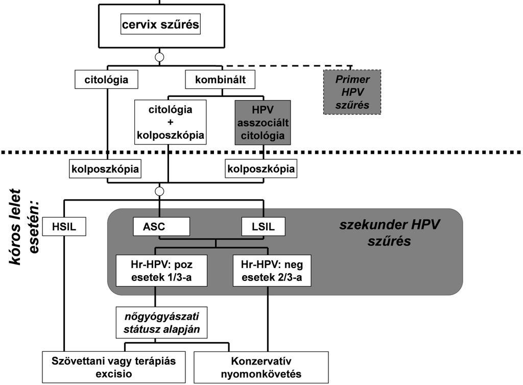 papillomavírus genomszerkezete