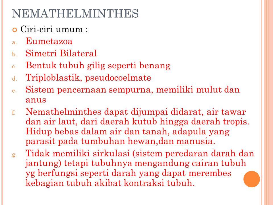 les nemathelminthes ppt
