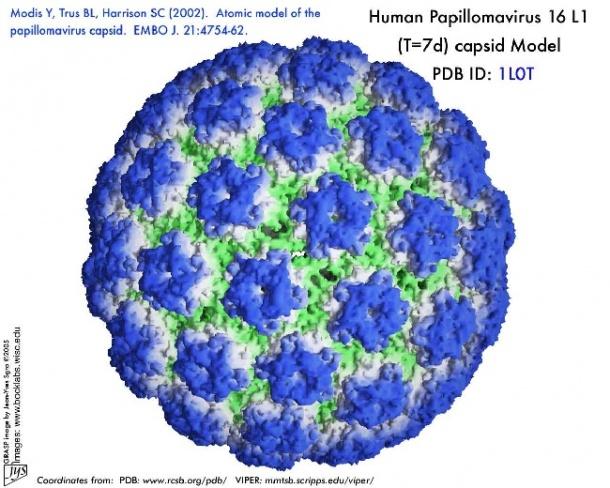 hpv oropharyngealis rák bemutatása fokozott condyloma