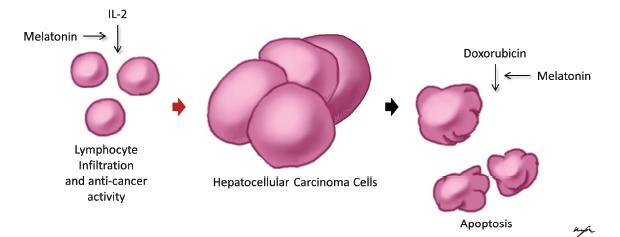 nyitott féreg vastagbél rák