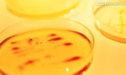 távolítsa el az éves pinwormokat hatékony gyógymód a féreg ellen