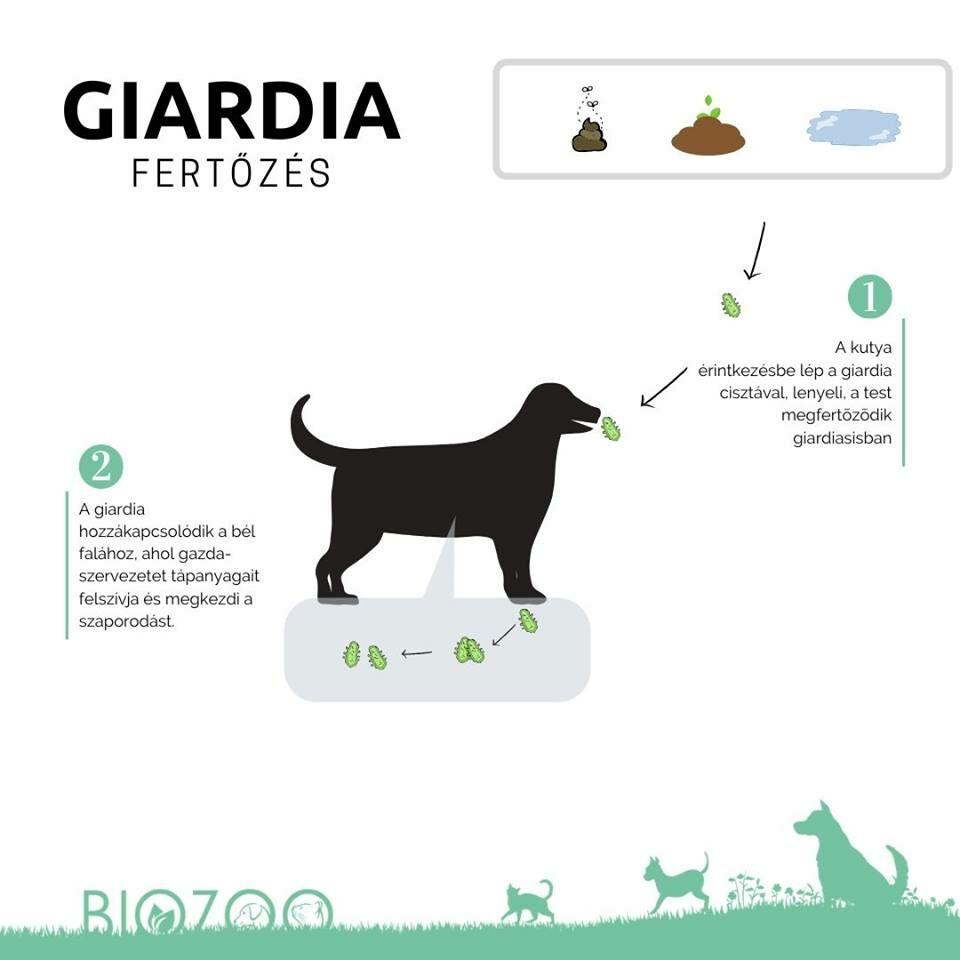 cos és a papilloma vírus elleni vakcina a giardiasis kezelésének szakaszai