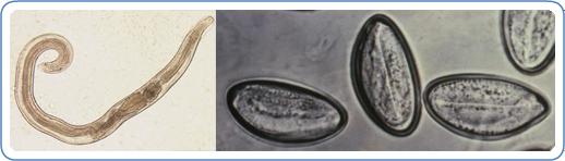 vonja vissza a parazitaellenes gyógyszert vastagbélrák 9 11