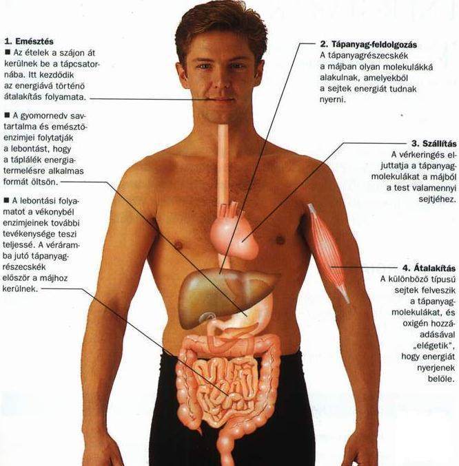 hogyan lehet férgeket látni enterobiosis kezelés tabletták
