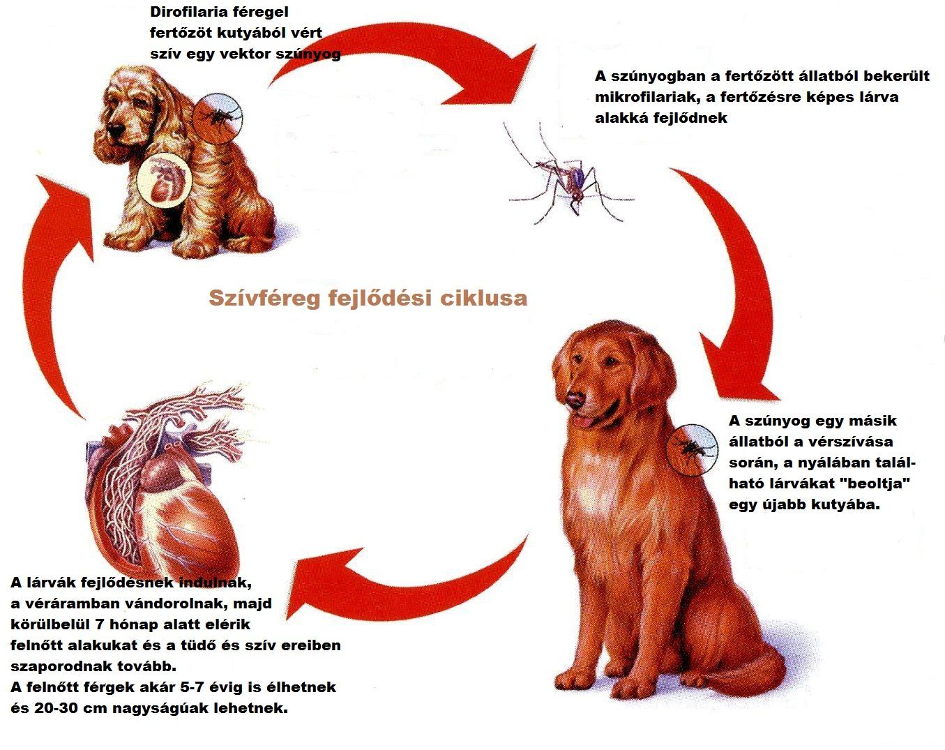 férgek számára kutyákban