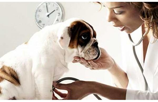 oxyuris petesejtek kezelése