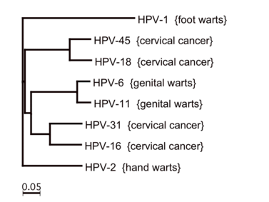 HPV-szűrés és tipizálás - ujhelyijeno.hu