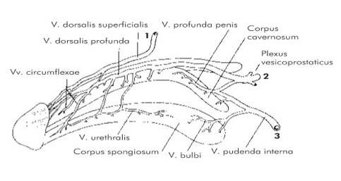 multiplex papilloma és papillomatosis hpv magas kockázatú 16 pcr pozitív