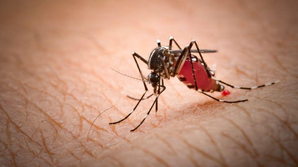 átvitel papilloma vírus fürdő papillomavírus krém ember