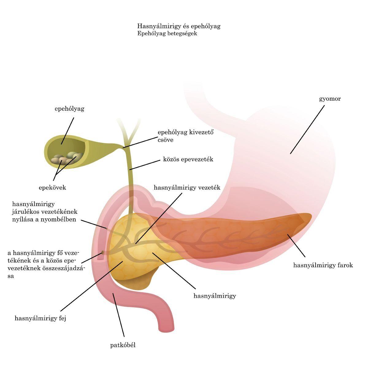 hpv, valamint a torok és a száj rákja férgek a lányok kezelésében