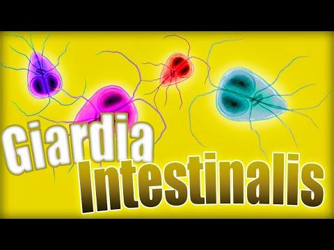 Giardiasis inkubációs periódus. Lappangási idő