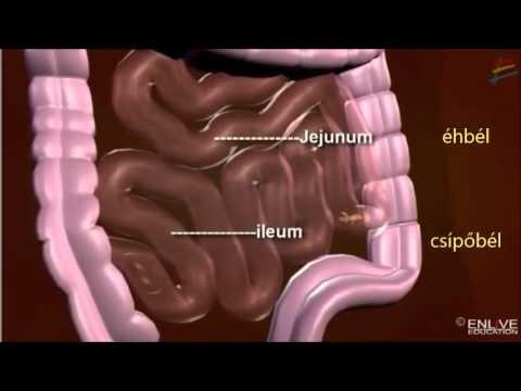 bél helminthiasis kezelése paraziták az emberi testben felismerik