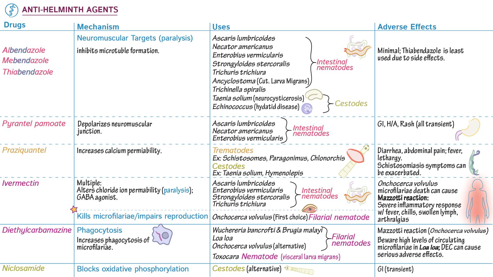 Giardia usmle - Selective IgA Deficiency Mnemonic for USMLE az ascaris kórokozója