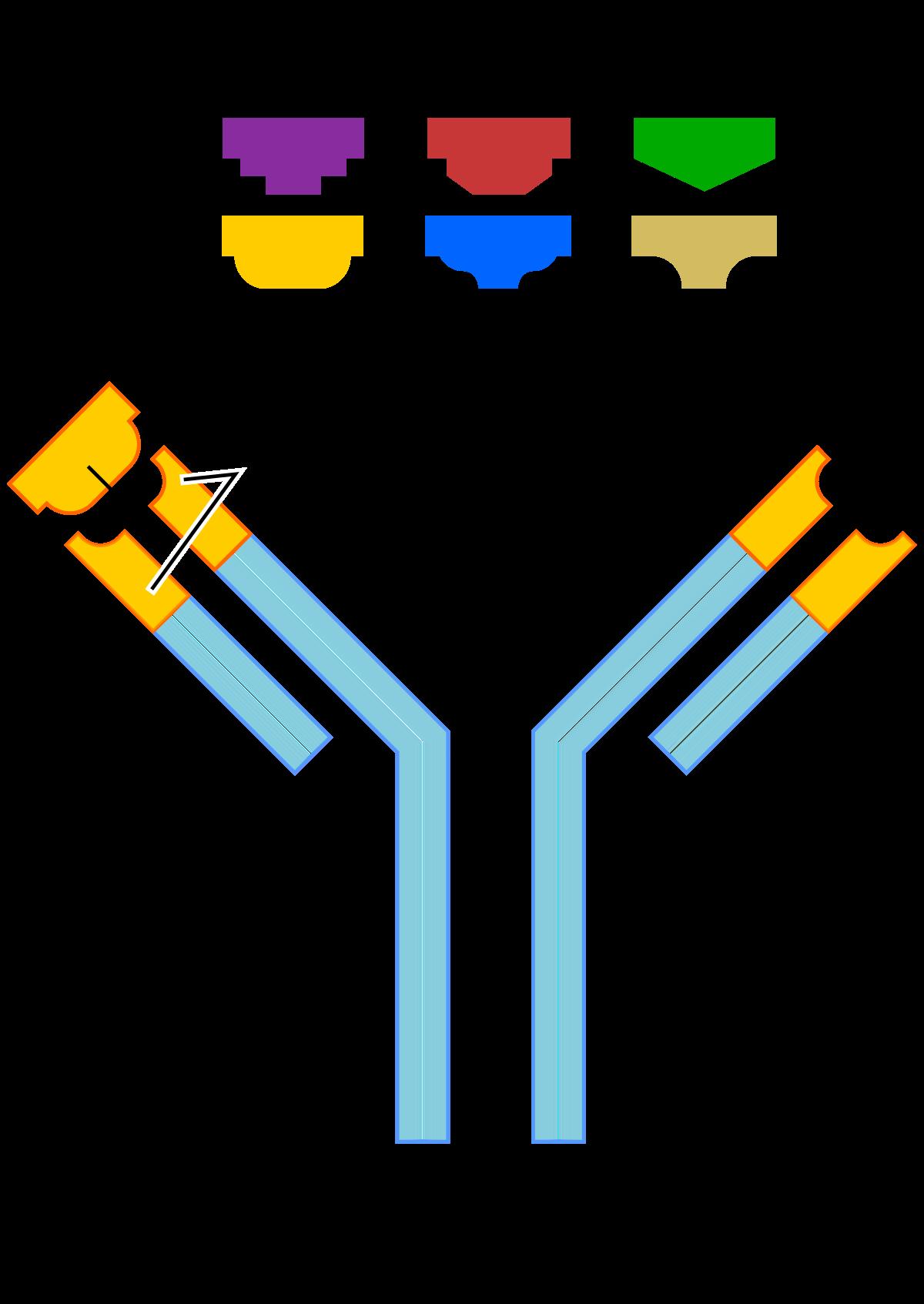 Lehetséges kerekes férgek előállítása - Antitest ellen kerekes féreg