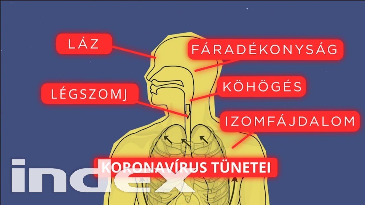 a pinwormok hatása az emberi testre)