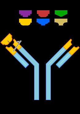 antitestek négy helmintus ellen
