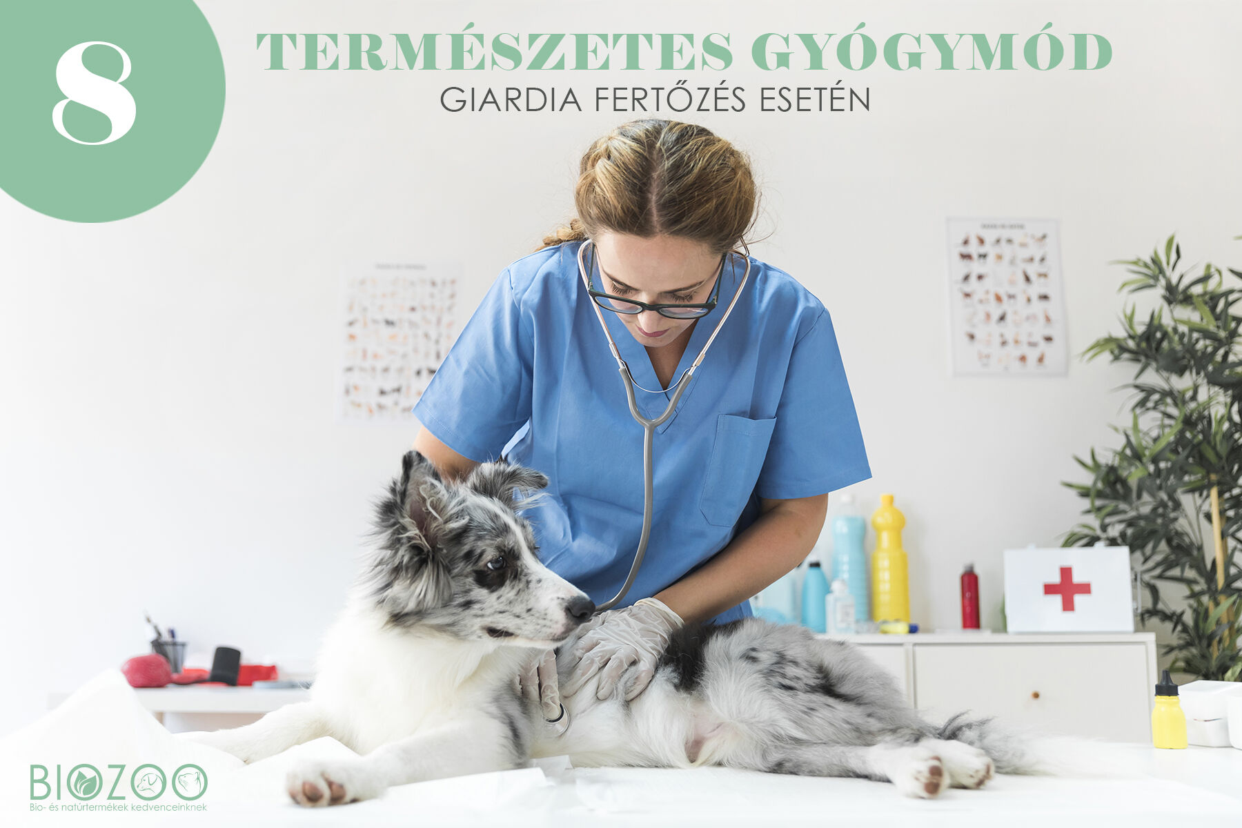giardia kutya tünetei