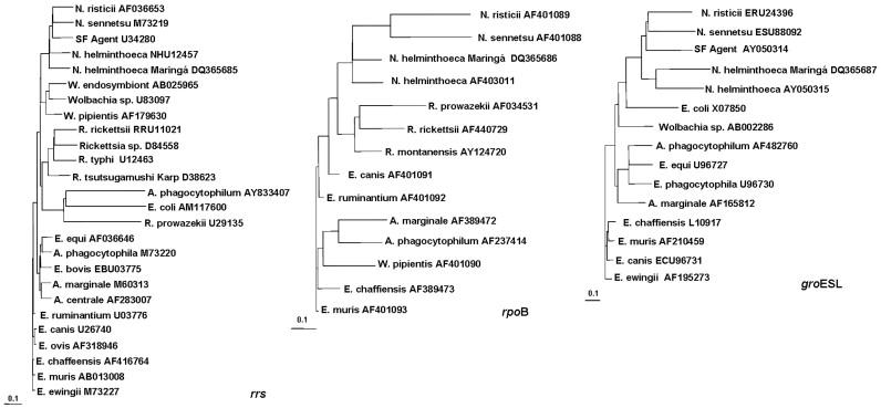 neorickettsia helminthoeca kezelés top 10 vírus