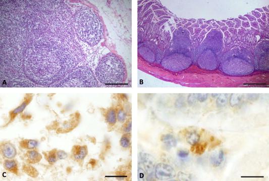 neorickettsia helminthoeca kezelés apró parazita vizsgálat